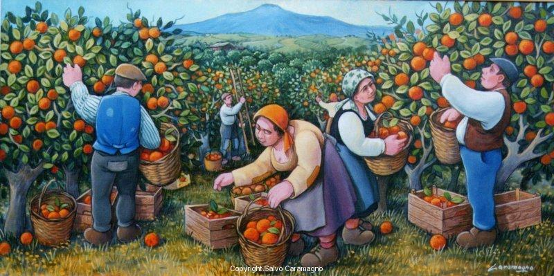 Arance di Sicilia cm. 40x80